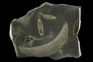 Jurassic Marine Reptile Bone In Cross-Section - Whitby, England For Sale, #96347