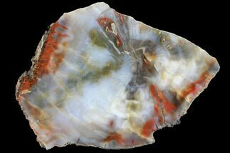 "10.1"" Wide, Polished Petrified Wood Section - Arizona For Sale, #98402"