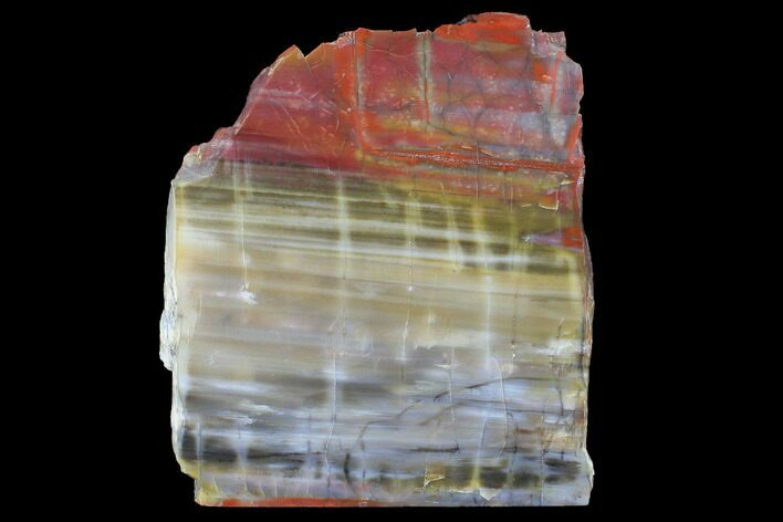 "8.1"" Wide, Polished Petrified Wood Slab - Arizona"