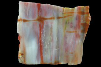 "4.8"" Wide, Polished Petrified Wood Section - Arizona For Sale, #98405"