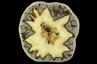 "8.1"" Polished Septarian Nodule (Half) - Utah For Sale, #98633"