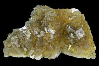 "Buy 3.3"" Yellow, Cubic Fluorite Crystal Cluster - Spain - #98701"