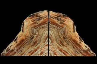"Buy 7.1"" Tall, Arizona Petrified Wood Bookends - Red & Black - #99319"
