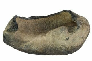 Whale (Unknown Species) - Fossils For Sale - #99963