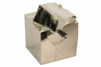 Pyrite - Fossils For Sale - #99996