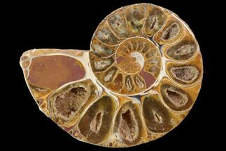 "Buy 3.4"" Sliced, Agatized Ammonite Fossil (Half) - Jurassic - #100555"