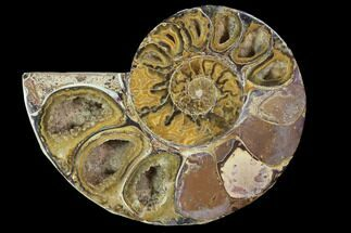 "2.9"" Sliced, Agatized Ammonite Fossil (Half) - Jurassic For Sale, #100538"