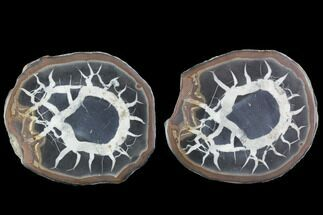 Septarian - Fossils For Sale - #101211