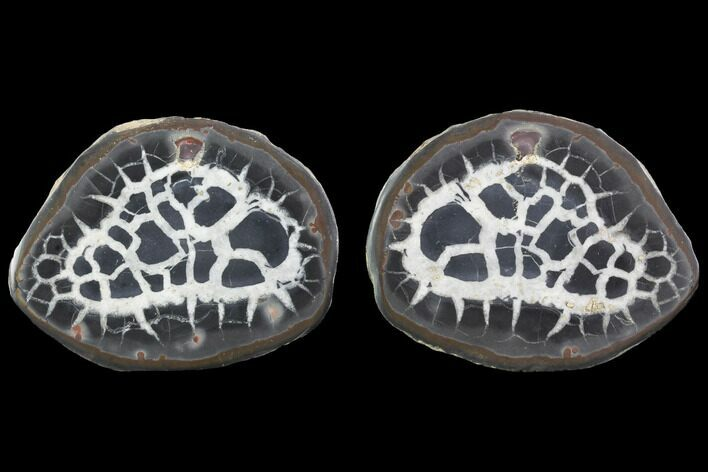 "3.2"" Cut/Polished Septarian Nodule Pair - Morocco"