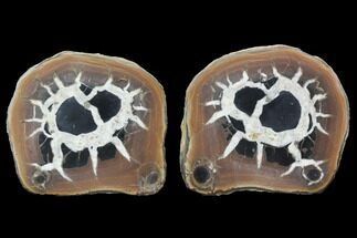 "Buy 3"" Cut/Polished Septarian Nodule Pair - Morocco - #101200"
