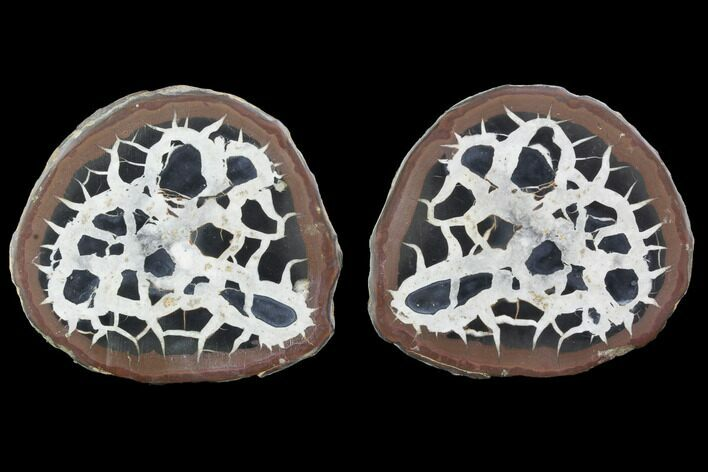 "3"" Cut/Polished Septarian Nodule Pair - Morocco"