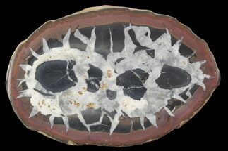 Septarian - Fossils For Sale - #101286