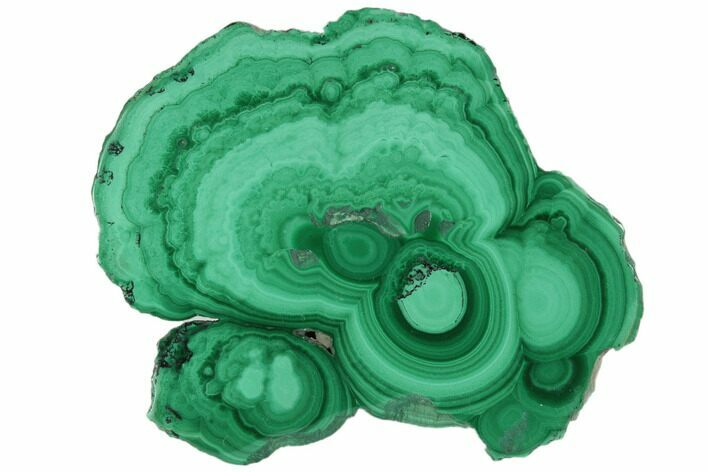 "1.5"" Polished Malachite Stalactite Slice - Congo"