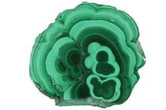 "Buy 1.7"" Polished Malachite Stalactite Slice - Congo - #101911"