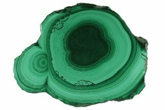 "1.3"" Polished Malachite Stalactite Slice - Congo For Sale, #101918"
