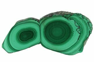 "Buy 2.1"" Polished Malachite Stalactite Slice - Congo - #101923"