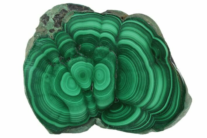 "1.6"" Polished Malachite Stalactite Slice - Congo"