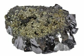 Galena & Pyrite - Fossils For Sale - #102537