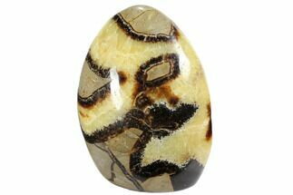 "Buy 4.2"" Free-Standing, Polished Septarian - Madagascar - #103030"