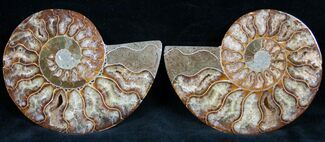 "4"" Cut and Polished Ammonite Pair For Sale, #7328"