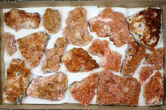 Wholesale Lot - Pink and Orange Bladed Barite - 19 Pieces For Sale, #103745
