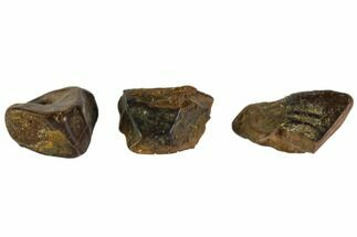 Hadrosaurus sp. - Fossils For Sale - #103716
