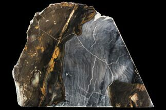 "Buy 6.7"" Petrified Wood - Oregon - #104803"