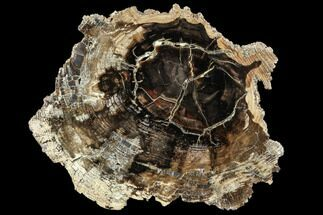 "7.1"" Petrified Wood (Cherry) Round - McDermitt, Oregon For Sale, #104912"
