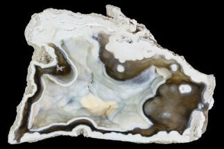 "4"" Agatized Fossil Coral Geode - Florida For Sale, #105318"