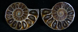 Small Desmoceras Ammonite Pair For Sale, #7541