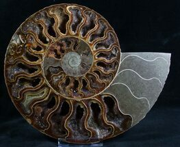 "8.5"" Split Ammonite Half - Deep Crystal Pockets For Sale, #7571"