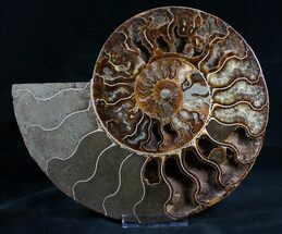 "8.7"" Split Ammonite Half - Agatized Chambers For Sale, #7574"