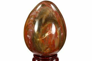 "Buy 3.5"" Colorful, Polished Petrified Wood ""Egg"" - Triassic - #107389"