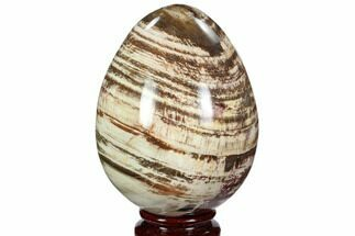 "3.8"" Colorful, Polished Petrified Wood ""Egg"" - Triassic For Sale, #107396"