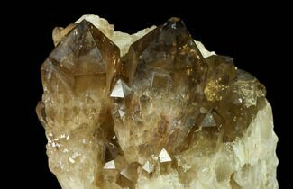 "3.8"" Smoky Quartz/Citrine Cluster - Congo For Sale, #82895"