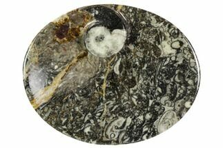 "Buy 4.7"" Oval Shaped Fossil Goniatite Dish - Morocco - #108013"