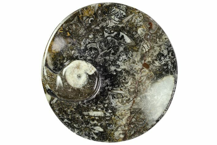 "4.3"" Round Fossil Goniatite Dish - Morocco"