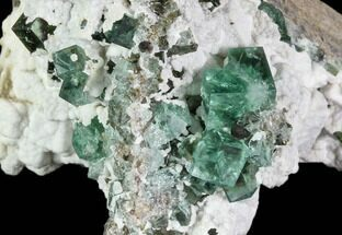 Fluorite  - Fossils For Sale - #106122