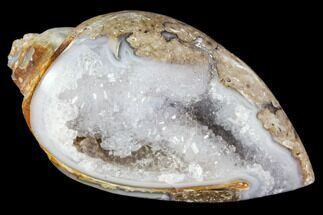 "1.45"" Chalcedony Replaced Gastropod With Druzy Quartz - India For Sale, #111153"