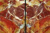 "7.8"" Red/Yellow Jasper Replaced Petrified Wood Bookends - Oregon - #111095-2"