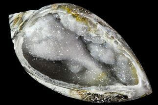 "1.75"" Chalcedony Replaced Gastropod With Druzy Quartz - India For Sale, #111181"