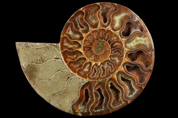 "4.4"" Agatized Ammonite Fossil (Half) - Crystal Chambers"