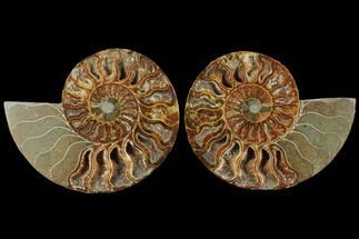 "4.6"" Agatized Ammonite Fossil (Pair) - Madagascar For Sale, #111482"
