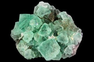 "2.2"" Green Fluorite Crystal Cluster - South Africa For Sale, #111572"