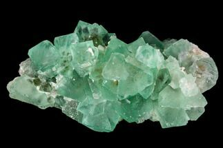 "Buy 2.9"" Green Fluorite Crystal Cluster - Orange River, South Africa - #111574"