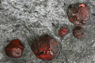 Garnet var. Almandine & Graphite - Fossils For Sale - #111834