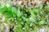 "2"" Vibrant Green Pyromorphite Crystal Cluster - China - #112204-2"