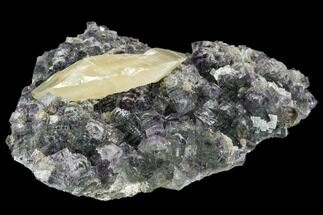 "Buy 4.9"" Fluorite and Yellow Calcite Association - Fluorescent! - #112873"