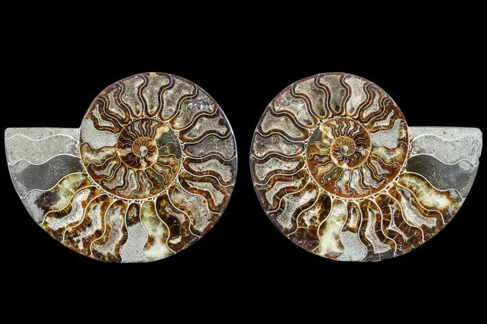 "7.6"" Agatized Ammonite Fossil (Pair) - Madagascar"