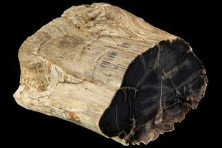 "6.8"" Tall Polished Petrified Wood Log - Arizona For Sale, #113285"
